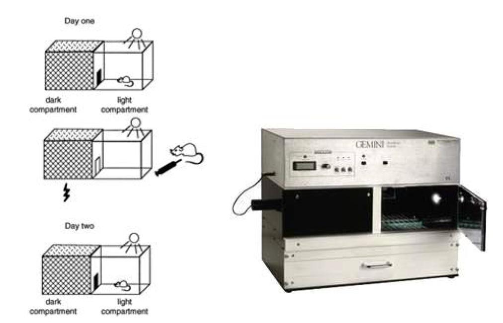 Passive avoidance test (수동회피 반응 시험) 과 Passive avoidance 측정 기기
