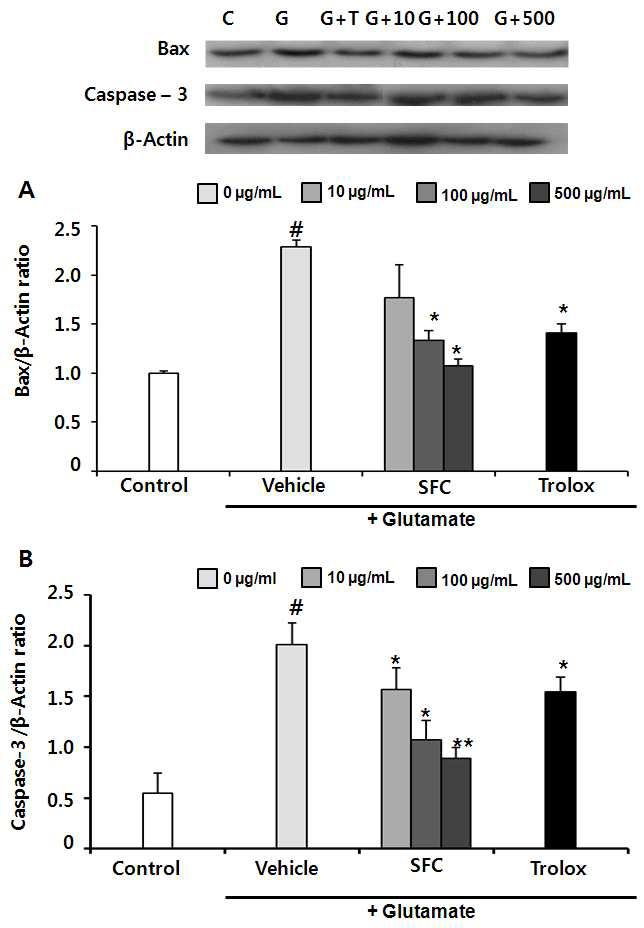 Effect of SFC on Bax protein level (A) and caspase-3-like activity (B). Control group (C) glutamate group (G), Trolox group (G+T), and SFC group (G+10, G+100 and G+500 10, 100 and 500 μg/mL treated 1 h before glutamate treated). #p<0.05 vs. control group. *p<0.05 and **p<0.01vs glutamate. SFC: steamed and fermented C. lanceolata