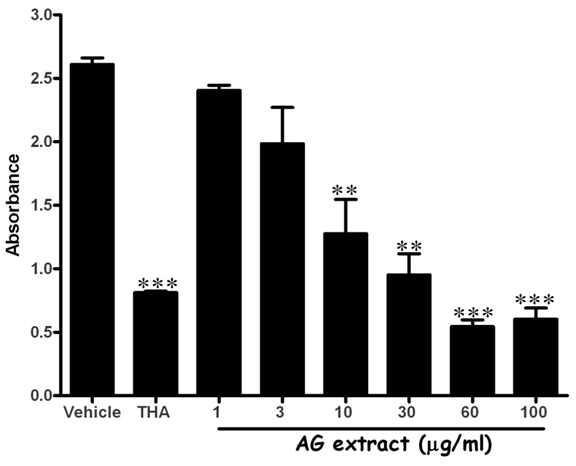 AG extract의 AchE활성 분석 (in vitro)