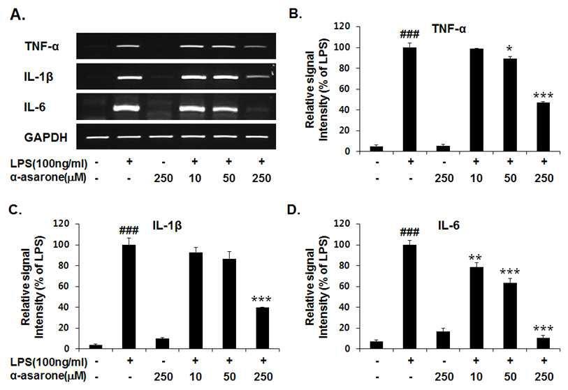 LPS로 자극된 BV-2 신경교세포에서 전염증성 매개체인 TNF-α, IL-1β, IL-6 사이토카인의 α-asarone 농도에 따른 저해 효능