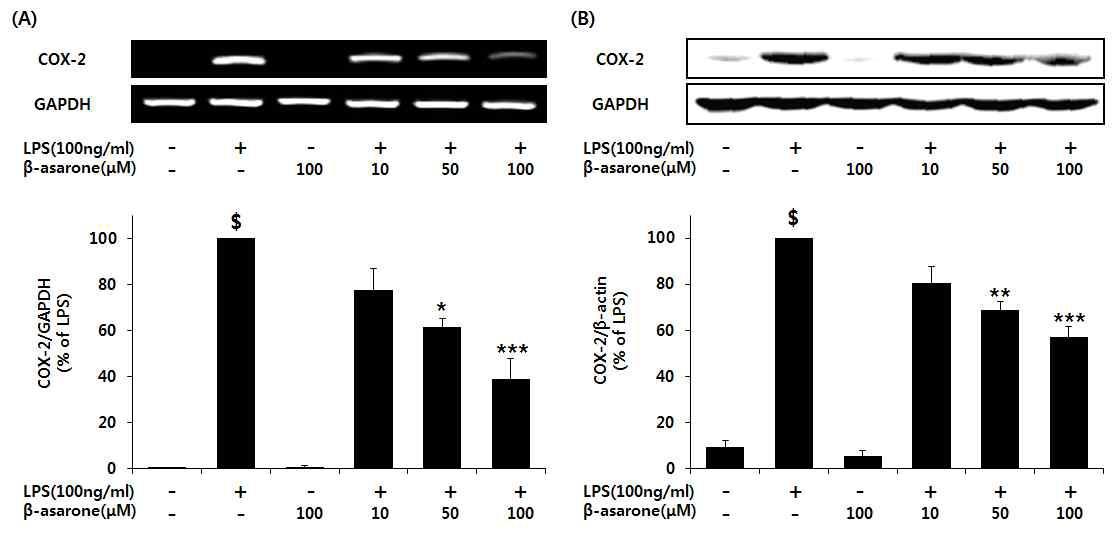 COX-2의 level에서의 β-asarone 농도에 따른 저해 효능