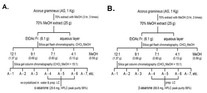 Fractionation and isolation of α,β-asarone from Acorus gramineus