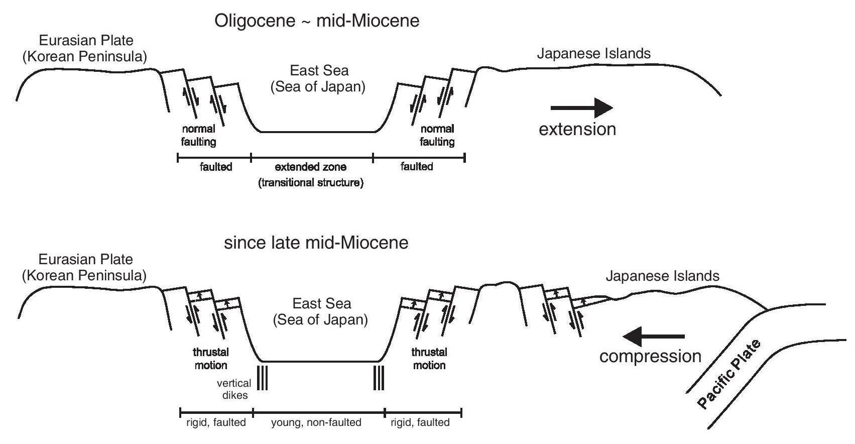 동해에서의 정단층과 역단층의 발생에 대한 도식적인 2차원 모델. (위) 바다 방향으로 경사진 정단 층은 동해 열림의 원인이 된 점신세에서 중기 중신에 동안의 고대 열개로 인해 발달되었다. (아래) 동해에서의 수축이 원인이 된 중기 중신세 말 이후의 압축. 압축력 장은 역단층 활동의 결과 동해 주변에서의 고대 정단 층 시스템과 반대다. 수직 균열은 대륙 끝부분과 동해 중신 사이의 지역에서 발달되었다.