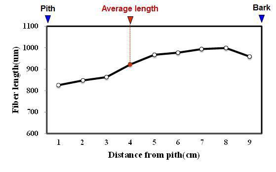 Bungur 수종의 목섬유 길이 방사방향 변이.