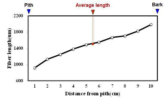 Cengkeh 수종의 목섬유 길이 방사방향 변이.