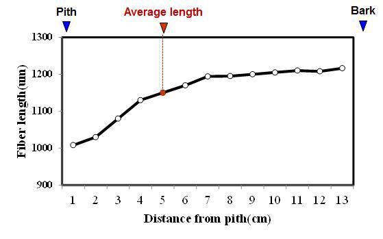 Durian 수종의 목섬유 길이 방사방향 변이.