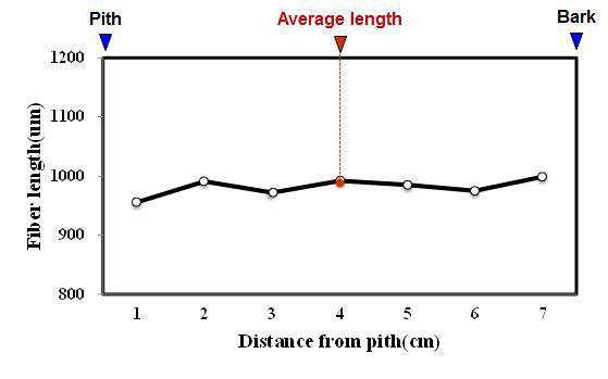 Jengkol 수종의 목섬유 길이 방사방향 변이.