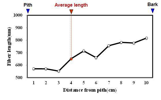 Kiara payung 수종의 목섬유 길이 방사방향 변이.