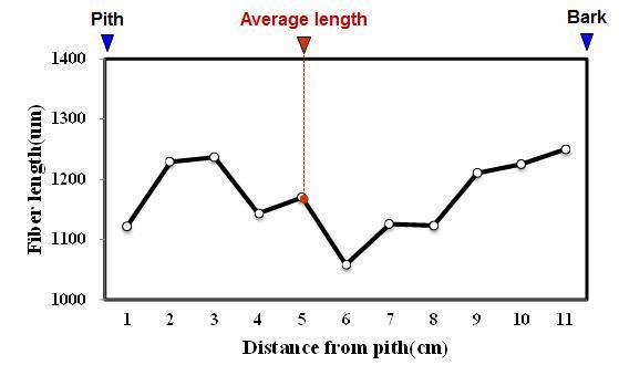 Kisamapng 수종의 목섬유 길이 방사방향 변이.