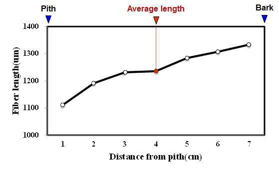 Kupa 수종의 목섬유 길이 방사방향 변이.