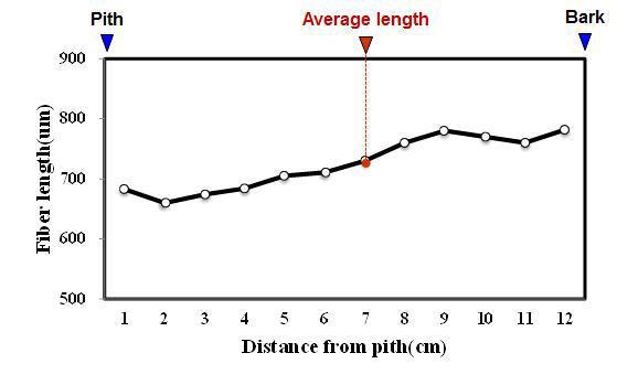Mangga 수종의 목섬유 길이 방사방향 변이.