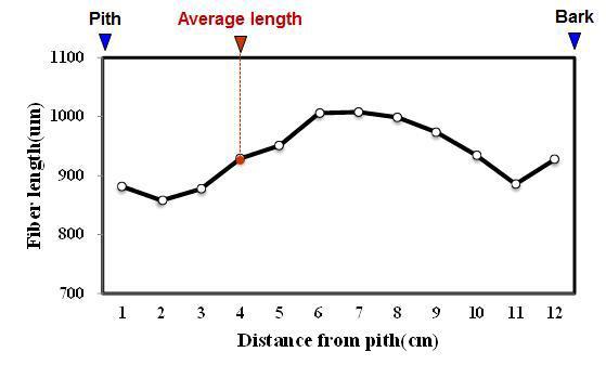Nangka 수종의 목섬유 길이 방사방향 변이.