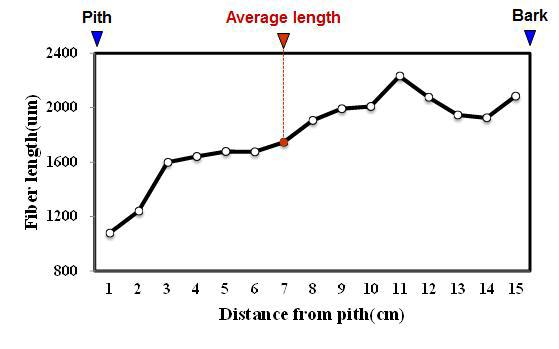 Puspa 수종의 목섬유 길이 방사방향 변이.