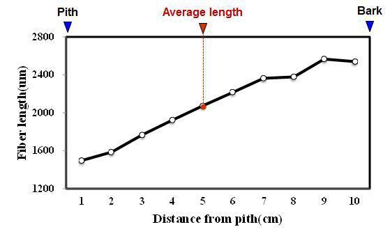 Salam 수종의 목섬유 길이 방사방향 변이.