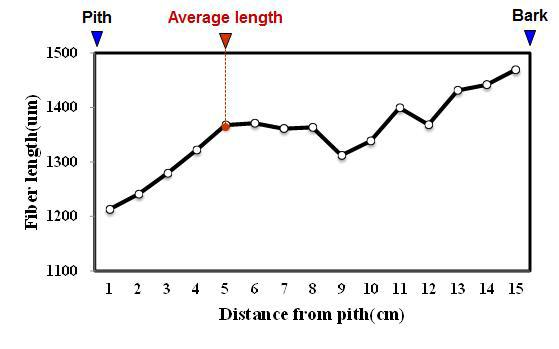 Tanjung 수종의 목섬유 길이 방사방향 변이.