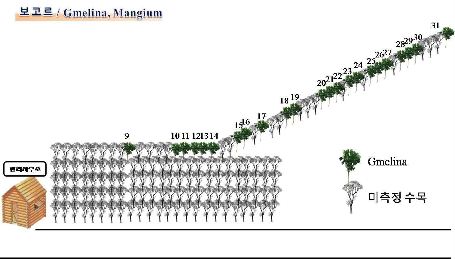 Parung Panjang 조림사업장의 실험사이트 및 실험목 선정 배치도(2).