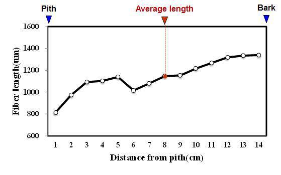 Afrika 수종의 목섬유 길이 방사방향 변이.