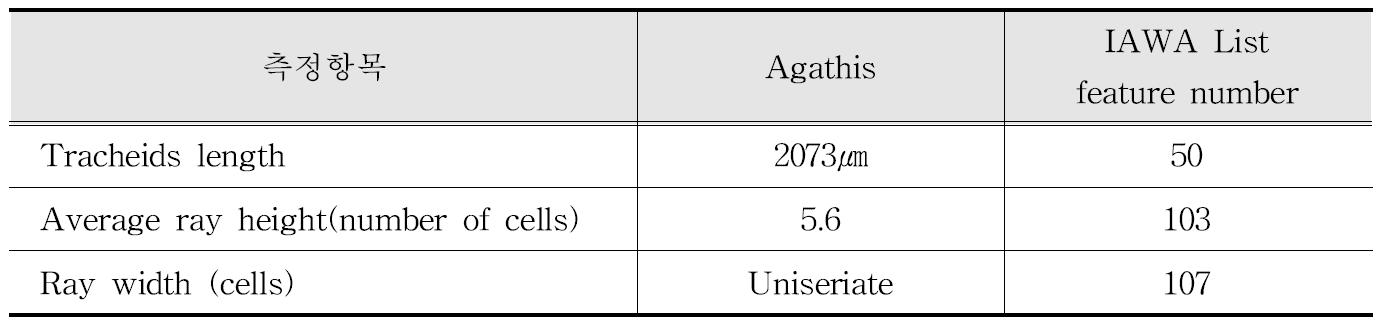 IAWA 기준에 따른 Agathis 수종의 해부학적 특성
