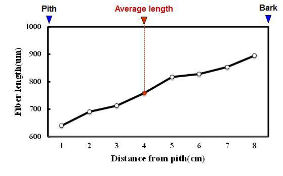 Albizia 수종의 목섬유 길이 방사방향 변이.