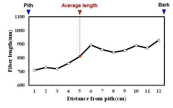 Gandaria 수종의 목섬유 길이 방사방향 변이.