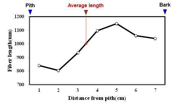 Gmelina 수종의 목섬유 길이 방사방향 변이.