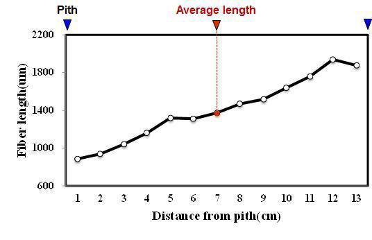 White jabon 수종의 목섬유 길이 방사방향 변이.