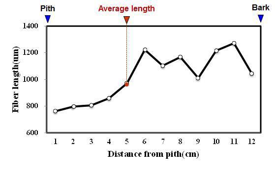Mahoni 수종의 목섬유 길이 방사방향 변이.