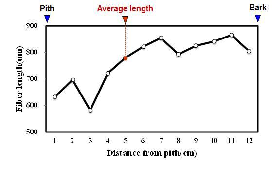 Mangium 수종의 목섬유 길이 방사방향 변이.