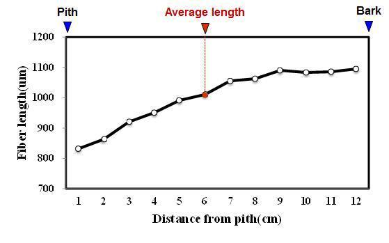 Mindi 수종의 목섬유 길이 방사방향 변이.