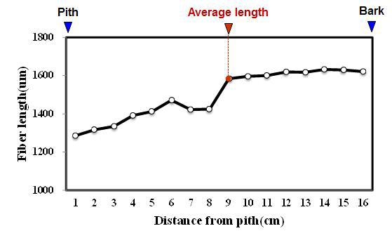 Red jabon 수종의 목섬유 길이 방사방향 변이.