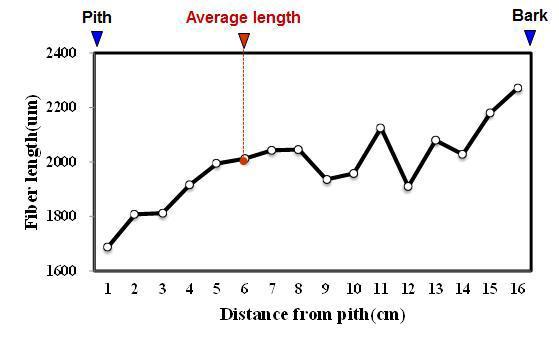 Simpur batu 수종의 목섬유 길이 방사방향 변이.