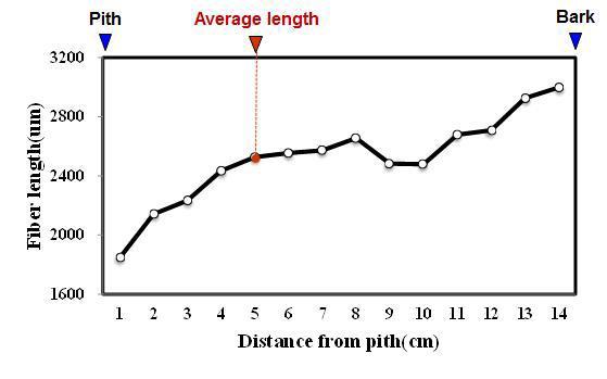 Sumatran pine 수종의 가도관 길이 방사방향 변이.
