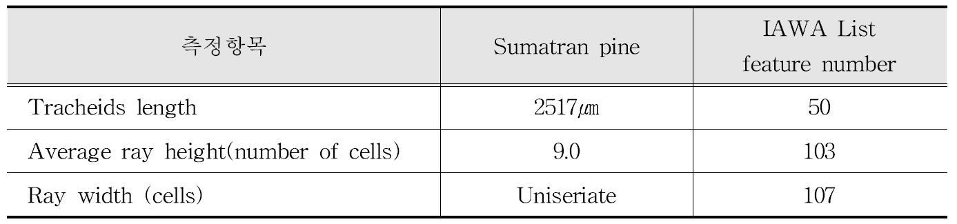 IAWA 기준에 따른 Sumatran pine 수종의 해부학적 특성