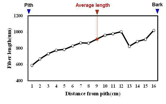 Trembesi 수종의 목섬유 길이 방사방향 변이.