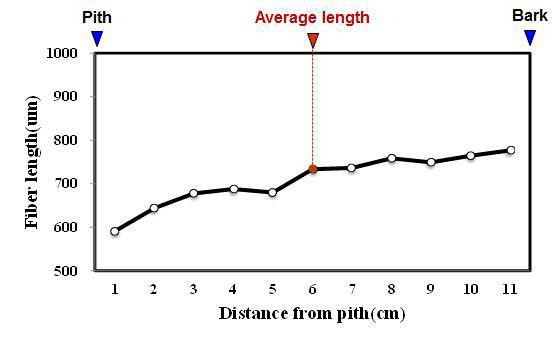 Angsana 수종의 목섬유 길이 방사방향 변이.