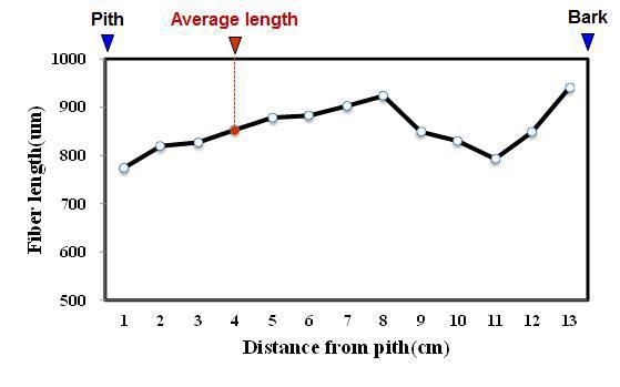 Bisbul 수종의 목섬유 길이 방사방향 변이.