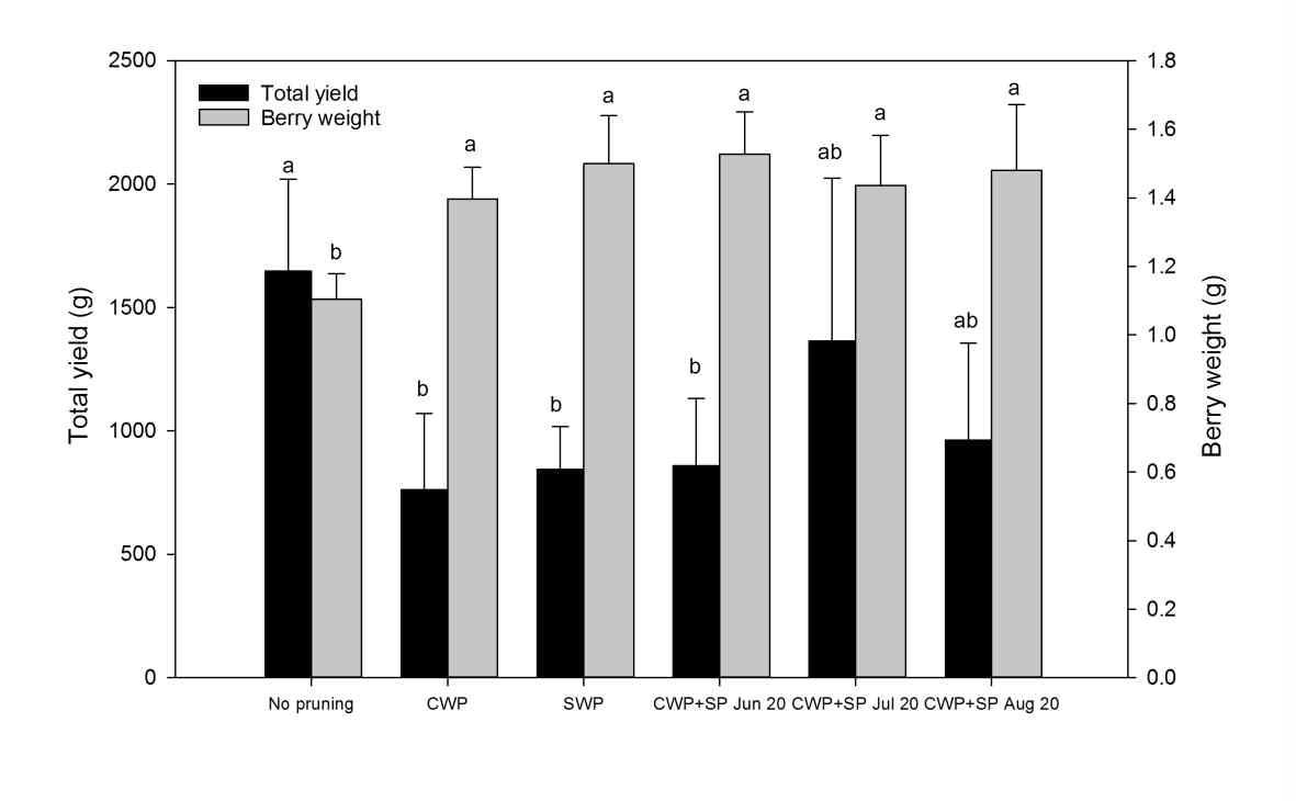 Total yield and berry weight of 'Misty' southern highbush blueberry in 2014 (CWP:conventional winter pruning, SWP: severe winter pruning, SP: summer pruning). Error bars represent the standadrd deviation (n = 5). Means in columns followed by different letters are significantly different by Tukey's test at p < 0.05