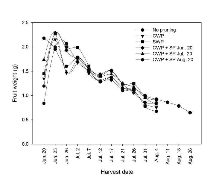Change in fruit weight of 'Misty' southern highbush blueberry over the 2014 harvest season (CWP: conventional winter pruning, SWP: severe winter pruning, SP: summer pruning).