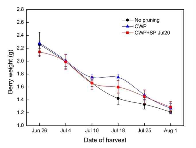Change in berry weight of 'Misty' southern highbush blueberry over the 2015 harvest season (CWP: conventional winter pruning, SWP: severe winter pruning, SP: summer pruning).