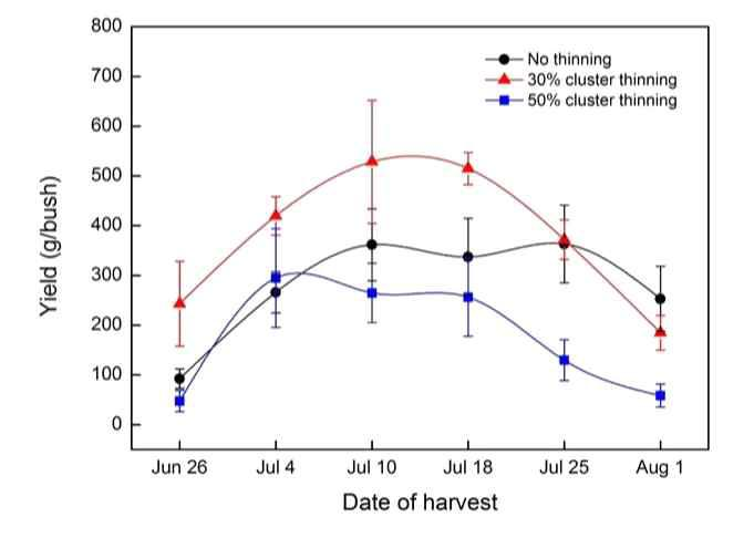 Change of yields of 'Misty' southern highbush blueberry over the 2015 harvest season followed by the cluster thinning treatments.