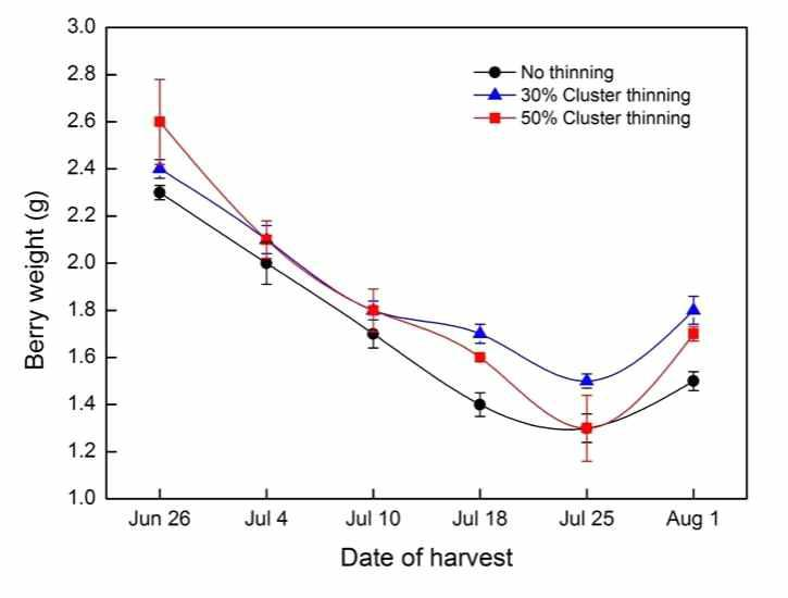 Change in berry weight of 'Misty' southern highbush blueberry followed by the cluster thinning treatments.