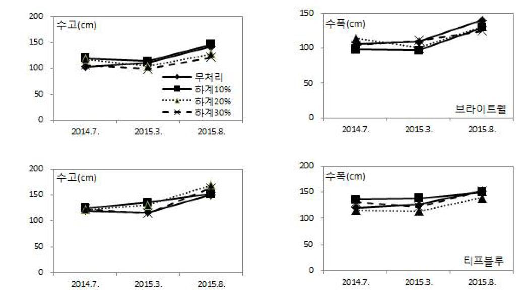 하계 절단전정 정도에 따른 연차간 생육 변화(브라이트웰: 위, 티프블루: 아래)