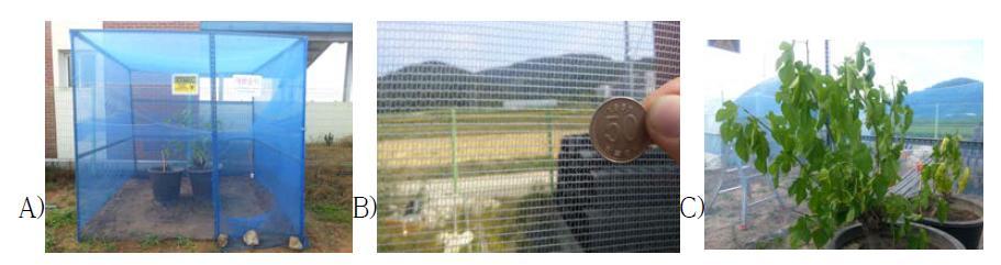 경북대학교 GMO포장 내에 설치한 GM누에 야생성실험용 포장