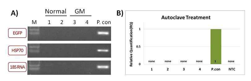 보통누에와 GM누에 유충 고압멸균 처리 후 GFP유전자 불활화 분석