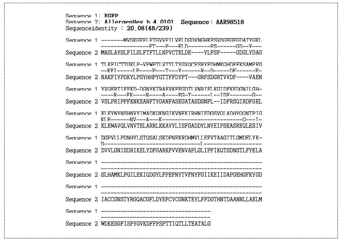 EGFP 알레르겐 DB(Allergen Hev b 4.0101, Sequence: AAR98518) 상동성 분석 주요 결과