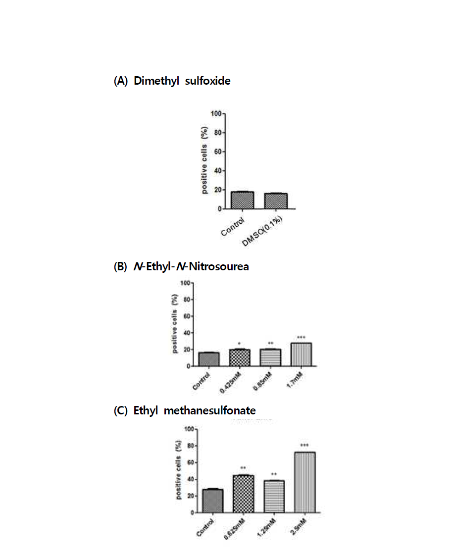 TUNEL assay를 이용한 수컷 생식줄기세포 독성