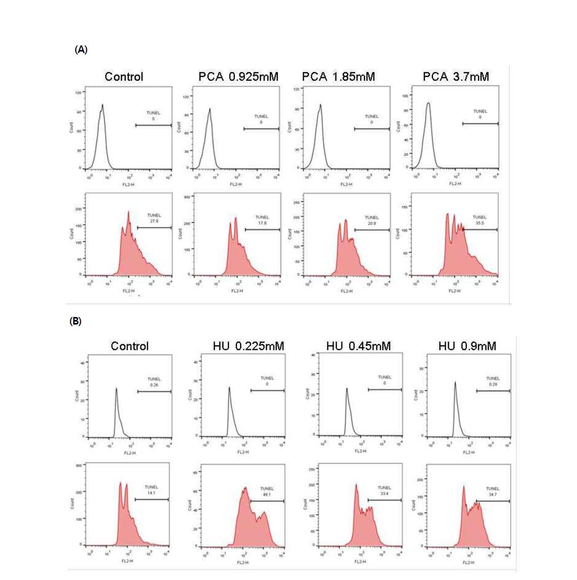 TUNEL assay를 이용한 시험 물질에 대한 수컷 생식줄기세포 독성