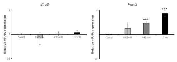 qRT-PCR을 이용한 N-Ethyl-N-Nitrosourea(ENU)에 대한 수컷 생식줄기세포 독성