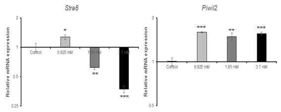 qRT-PCR을 이용한 ?-chloroaniline(PCA)에 대한 수컷 생식줄기세포 독성