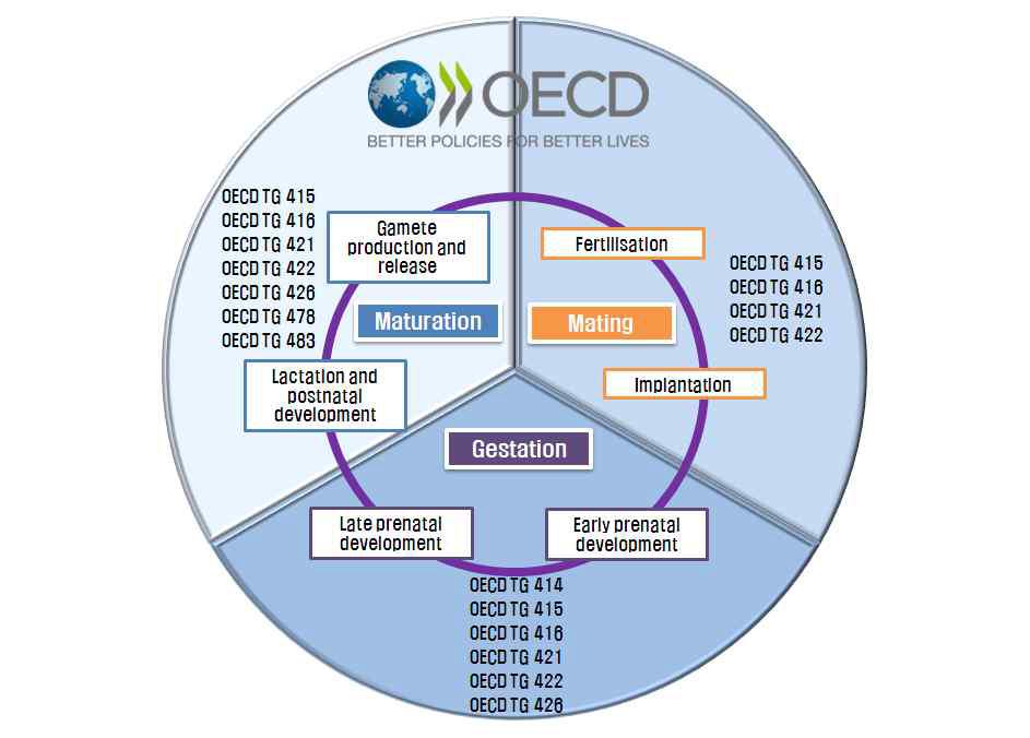 생식주기에 다른 OECD 생식발생독성 시험법 가이드라인
